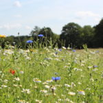 Meadow at Bramshot Farm Country Park