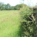 Hedgerow at Bramshot Farm Country Park by Hart Countryside team