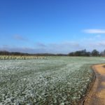 Keephatch Meadows neighbouring Piglittle Field
