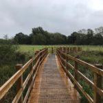 Boardwalk at Wellesley Water Meadow
