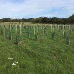 New planting at Wellesley Water Meadow
