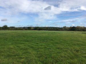 Wellesley Water Meadow