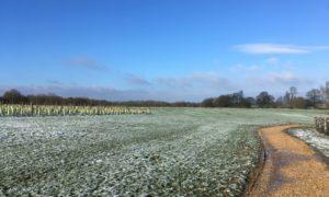 Keephatch Meadows