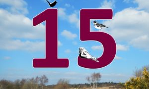Celebrating 15 years of the Thames Basin Heaths Special Protection Area