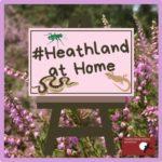 Heathland at Home