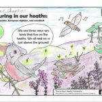 Photograph of a colouring sheet featuring our three iconic ground-nesting birds.