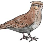 Colouring in sheet of a wonderful woodlark!