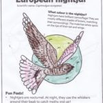 Colouring in sheet of nightjar with funky coloured moon..