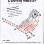 Colouring in sheet with life-like Dartford warbler!