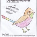 Colouring in sheet of a particularly colourful Dartford warbler.