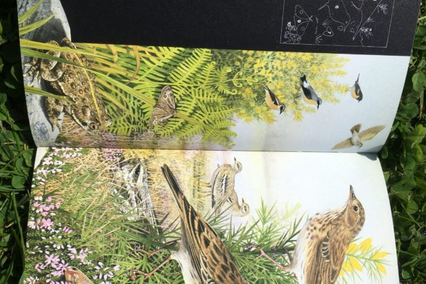 Photograph of heathland wildlife from Dave's favourite book