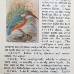Kingfisher from Flo's book