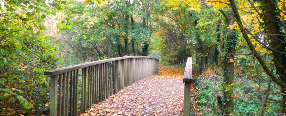 Cut Countryside Corridor