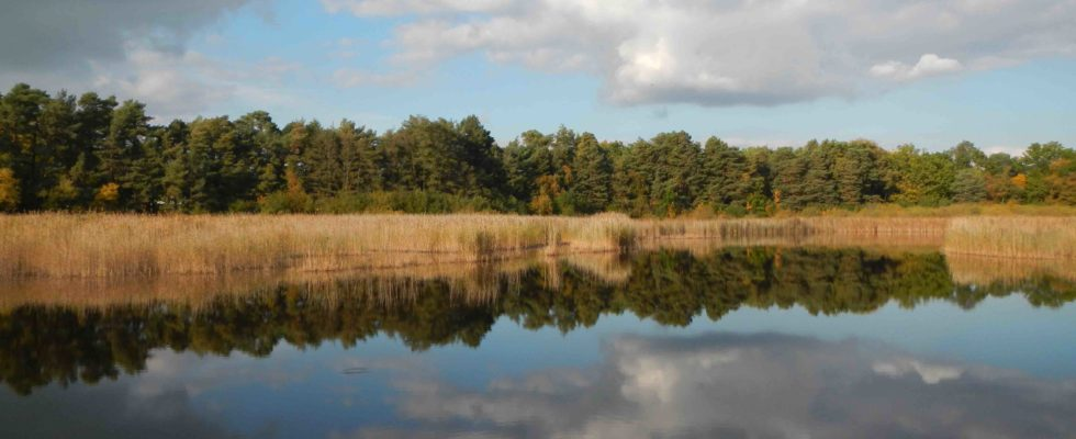 Englemere Pond