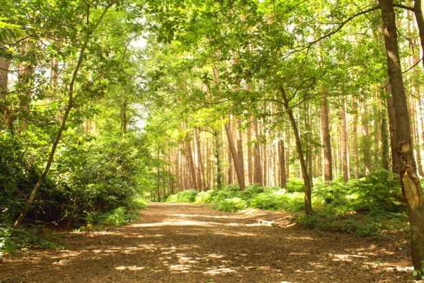Great Hollands Wood