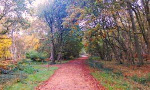 Southwood Woodland