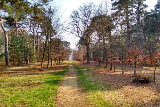 Chobham Place Woods