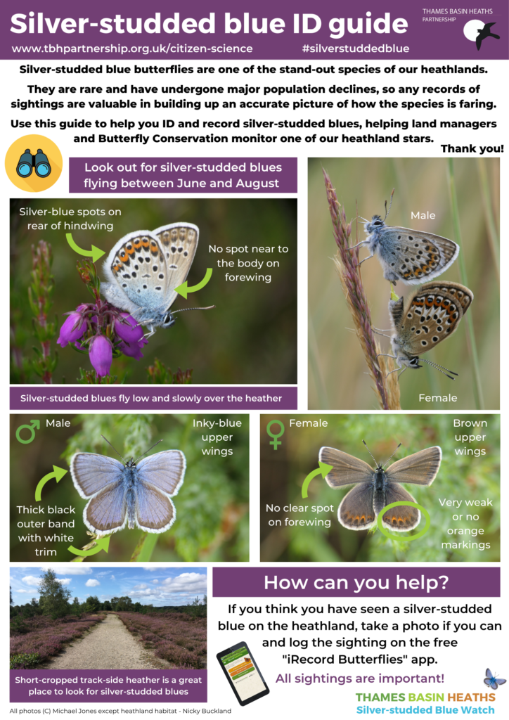 CLICK IMAGE TO DOWNLOAD: A handy guide to identifying silver-studded blues!