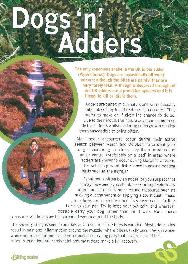 Dogs 'n' adders leaflet cover image