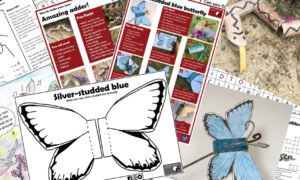 Photo shows a selection of our downloadable activities for kids including a make-your-own butterfly