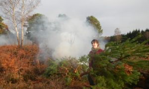 Removing scrub on heathland