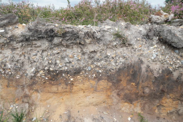 Sandy soil, one factor that gives us heathland