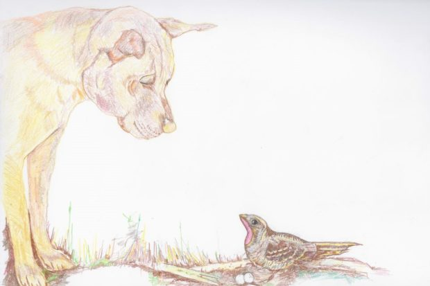 Drawing of a friendly dog looking at a nightjar on its nest