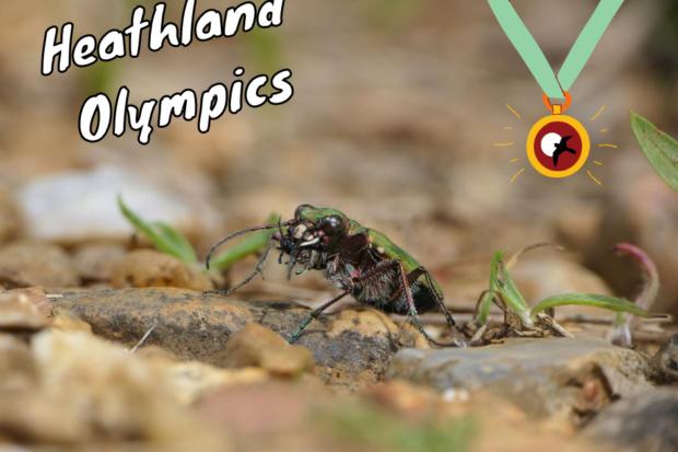 Heathland Olympics medal