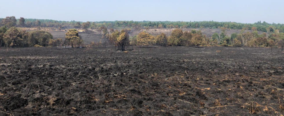 Scene of devastation after wildfire at Chobham Common in August 2020