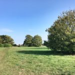 View of the meadows at Chertsey Meads