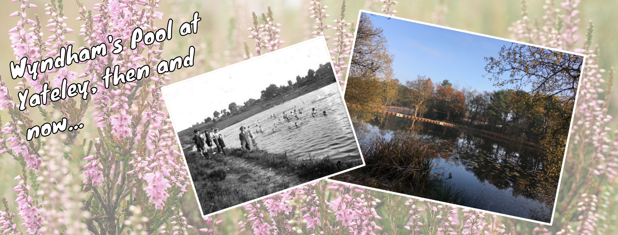 Historical photograph of Wyndham's Pool at Yateley Common compared to picture of the pool today