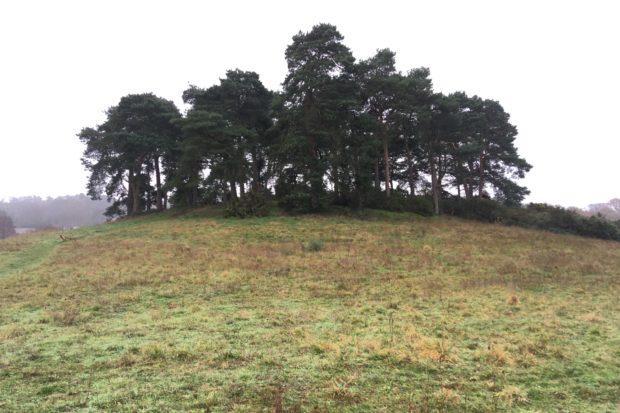 Photograph of a Broadmoor Farm Meadows knoll