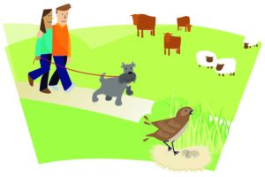 Image of dog walkers with their dog on a lead near ground-nesting bird