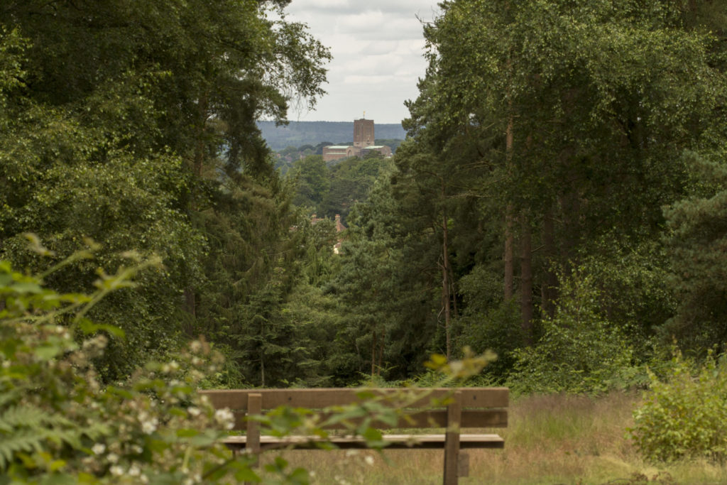 Photograph of the view of Guildford Cathedral through the trees
