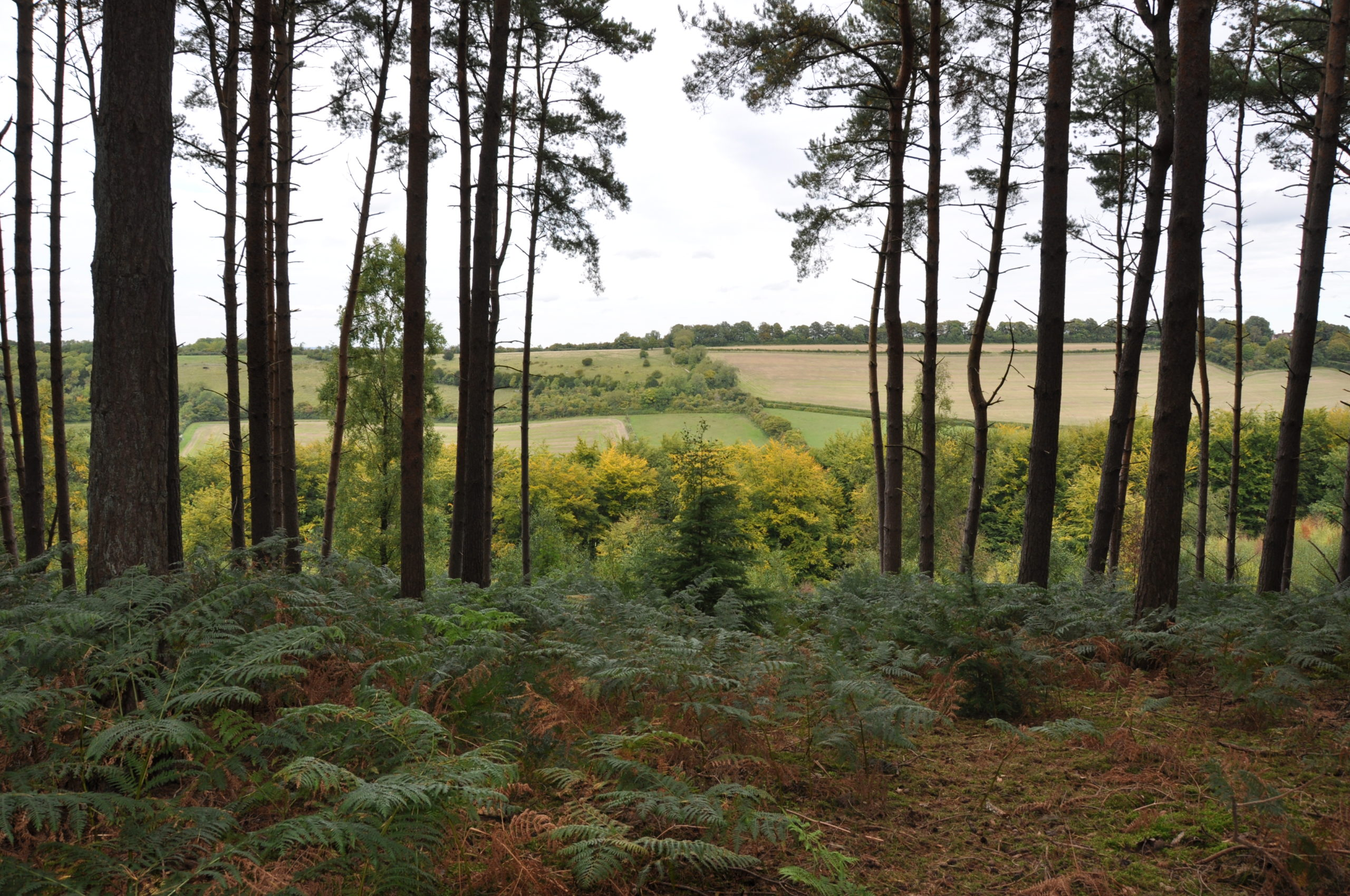 Photograph of the view from Chantry Wood to Pewley Down