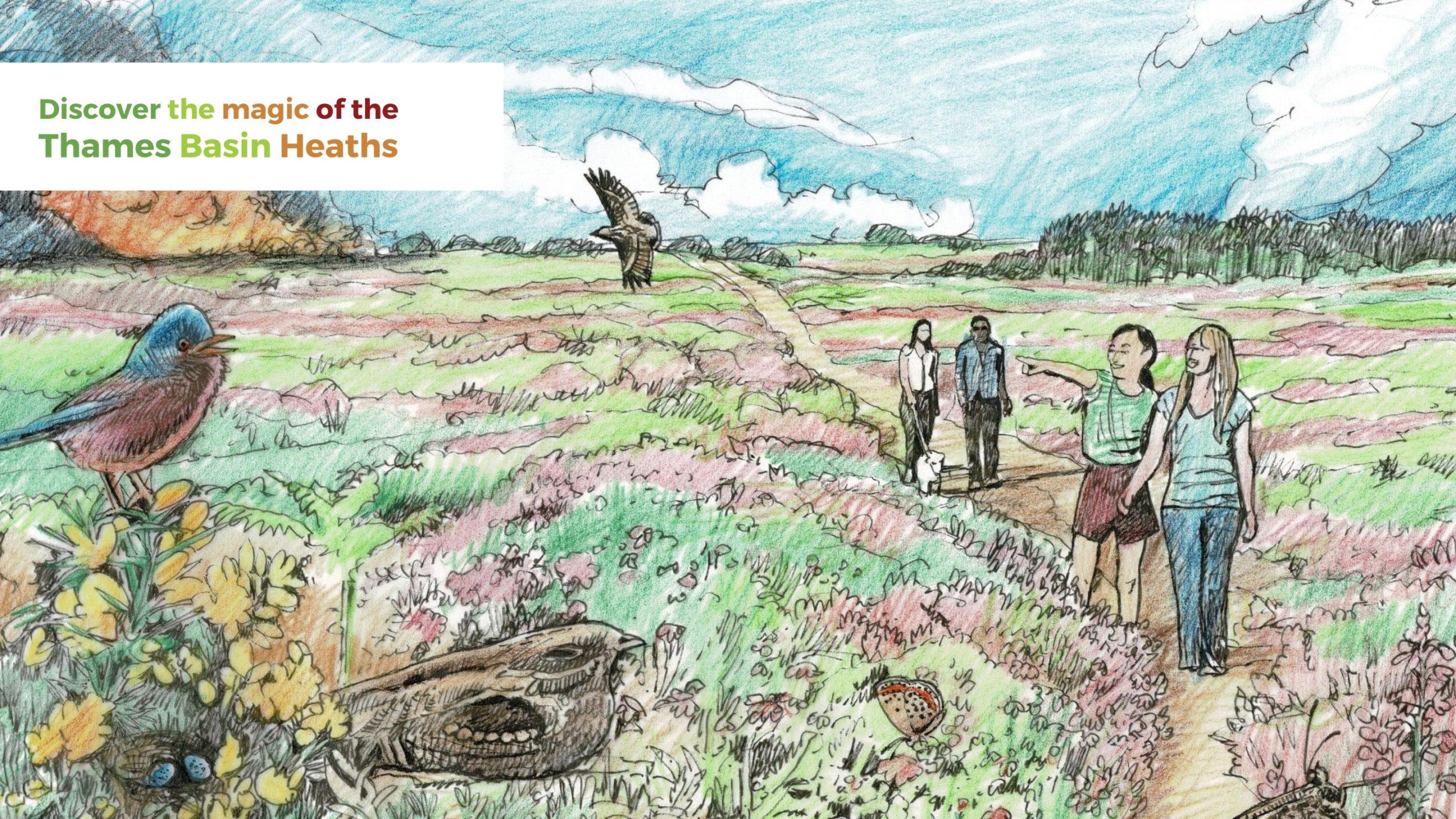 Heathland sketch by pangea-design.co.uk. Showing nightjar, Dartford warbler and woodlark.