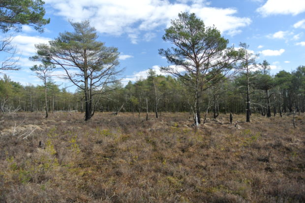 Photograph of Langshot Bog at Chobham Common in Surrey