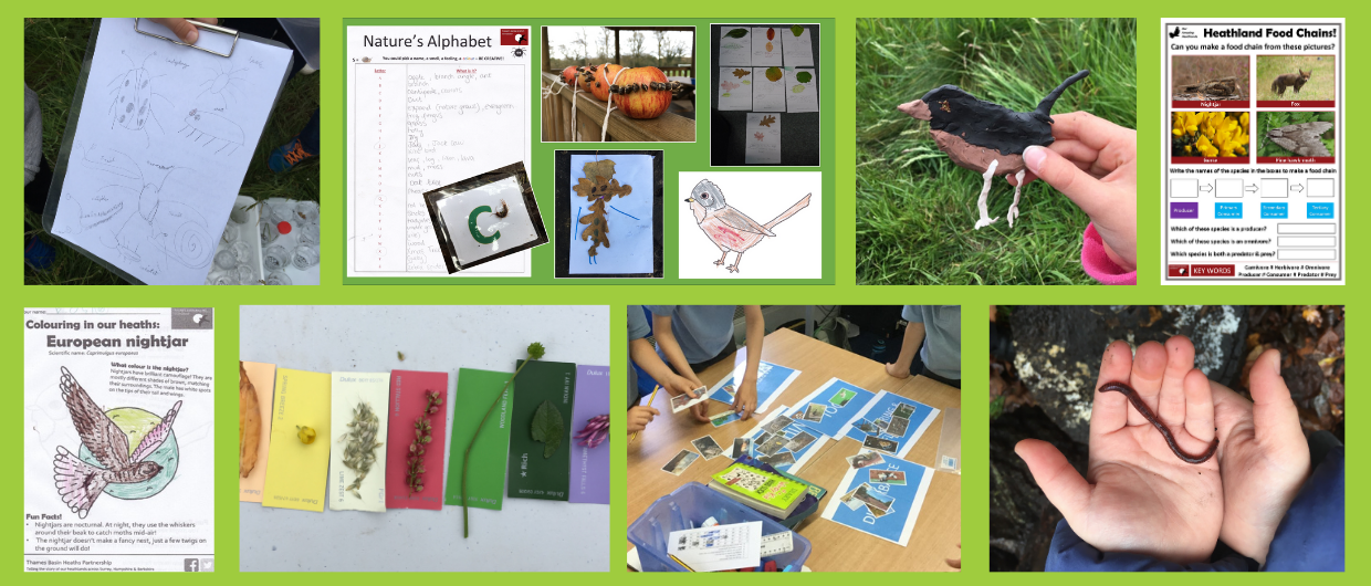 Montage of schools activities including nightjar colouring sheet and Nature's Alphabet activity sheet