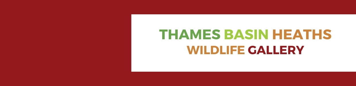 Thames Basin Heaths Special Protection Area banner