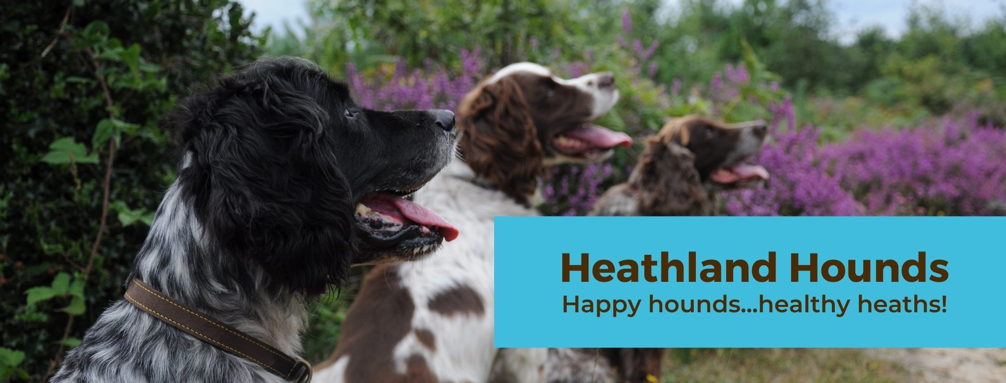 "Heathland Hounds ""Happy hounds...healthy heaths"""