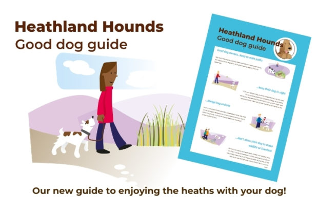Heathland Hounds - Good dog guide - Our new guide to enjoying the heaths with your dog!