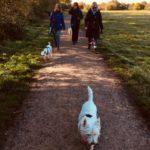 A Heathland Hounds members & their dogs