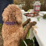 Naughty hound with muddy feet on the display table :-)
