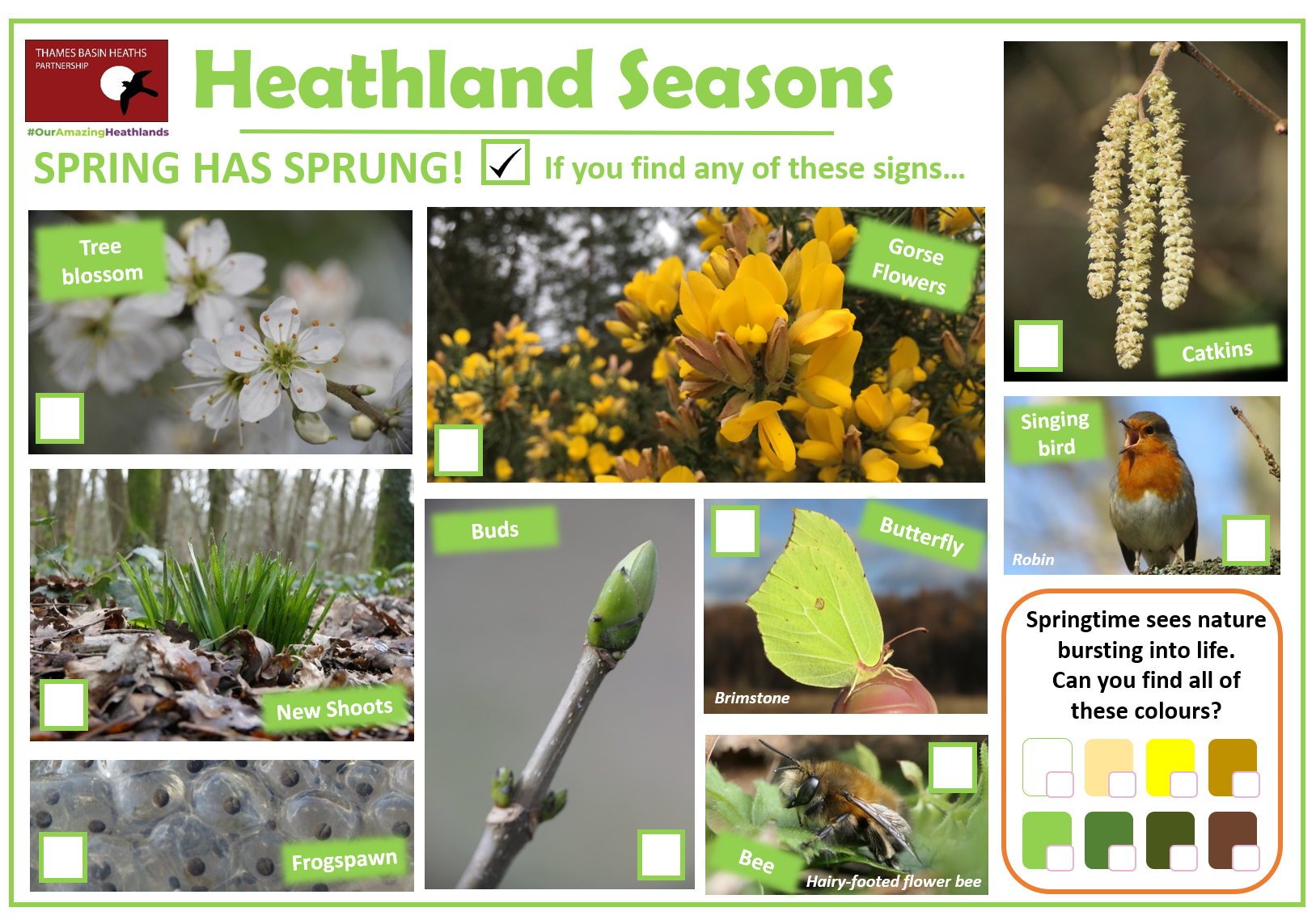 Click to download a heathland spotter sheet!