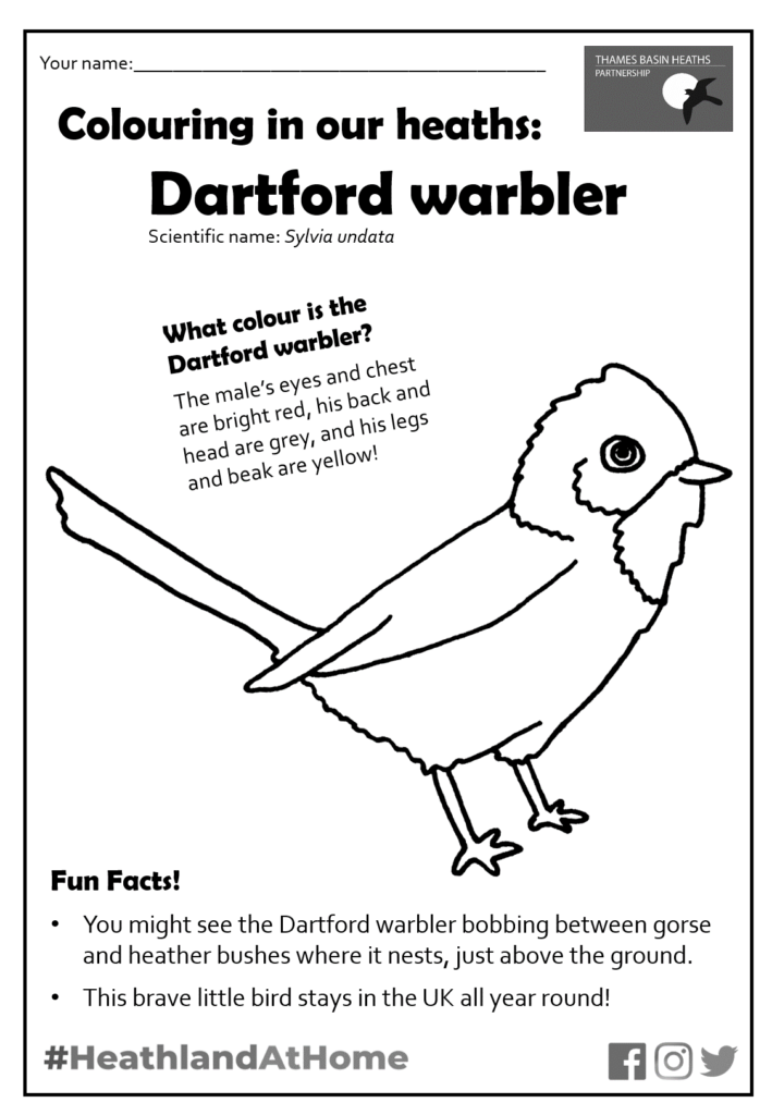 Click to download the Dartford warbler colouring sheet!