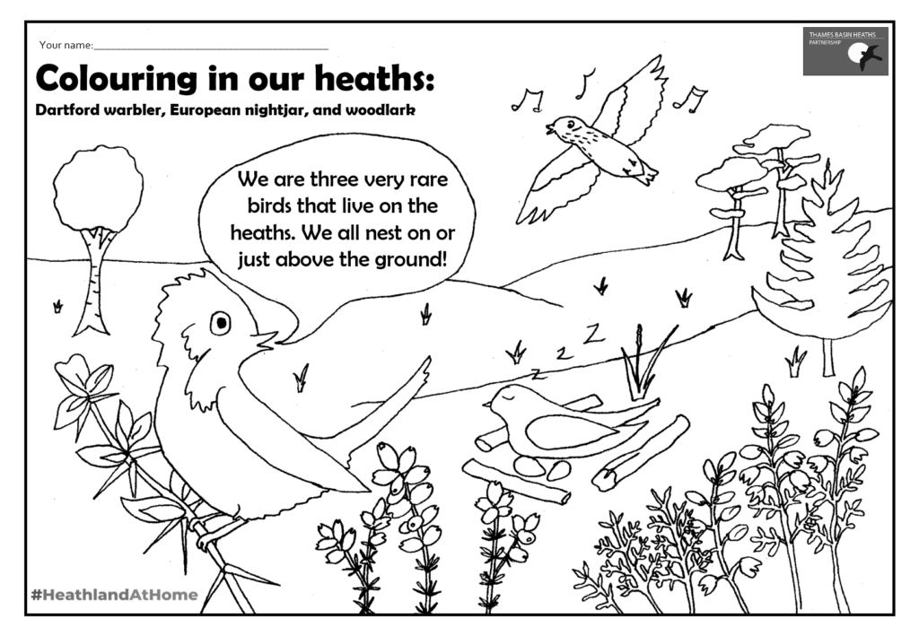 Click to download a heathland colouring sheet!