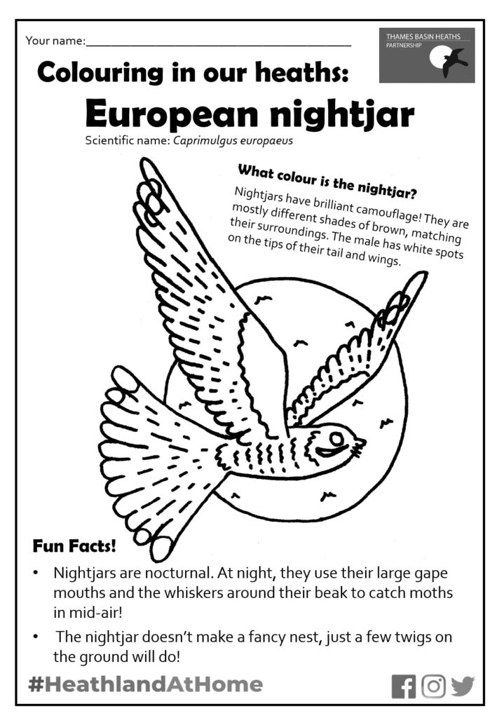 Click to download the nightjar colouring sheet