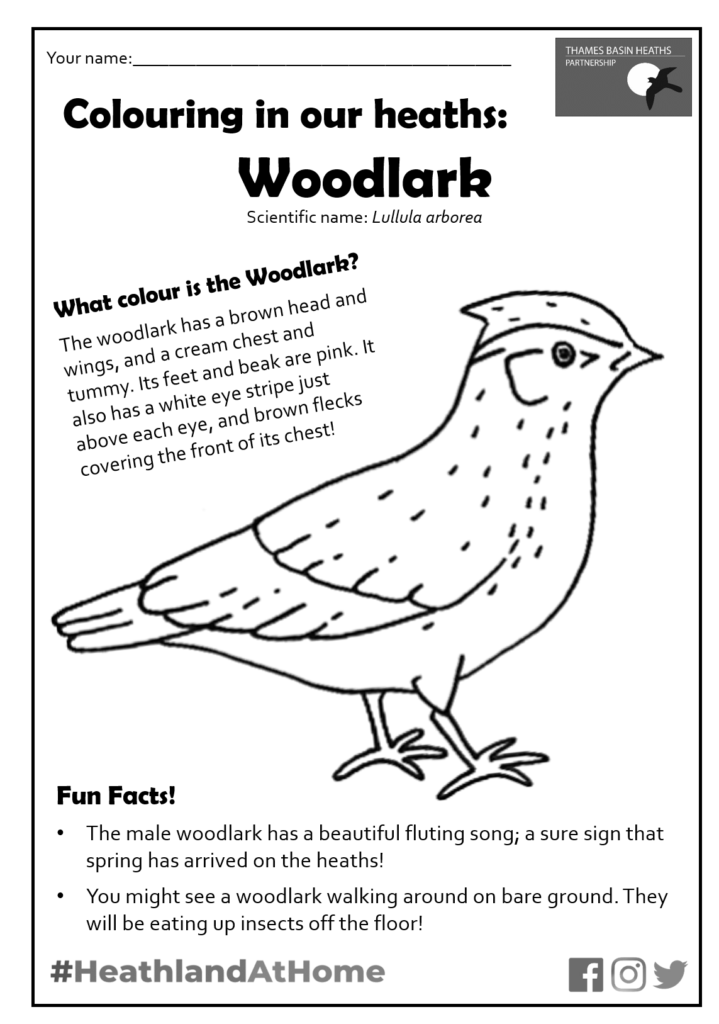Click to download the woodlark colouring sheet