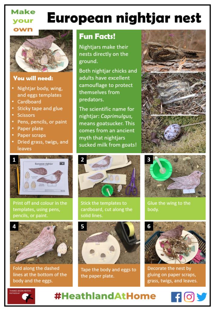 Click to download the nightjar nest activity sheet