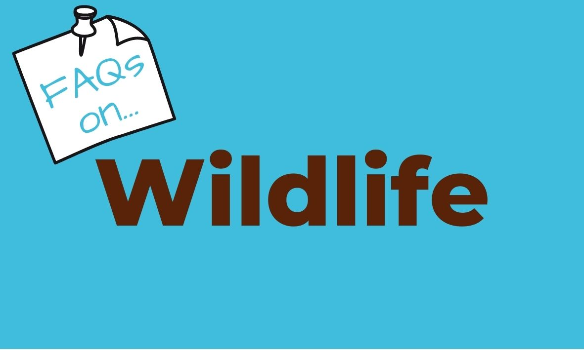 Click here for answers to questions about dogs and wildlife